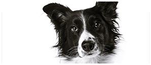 Gallery-Link--Dog