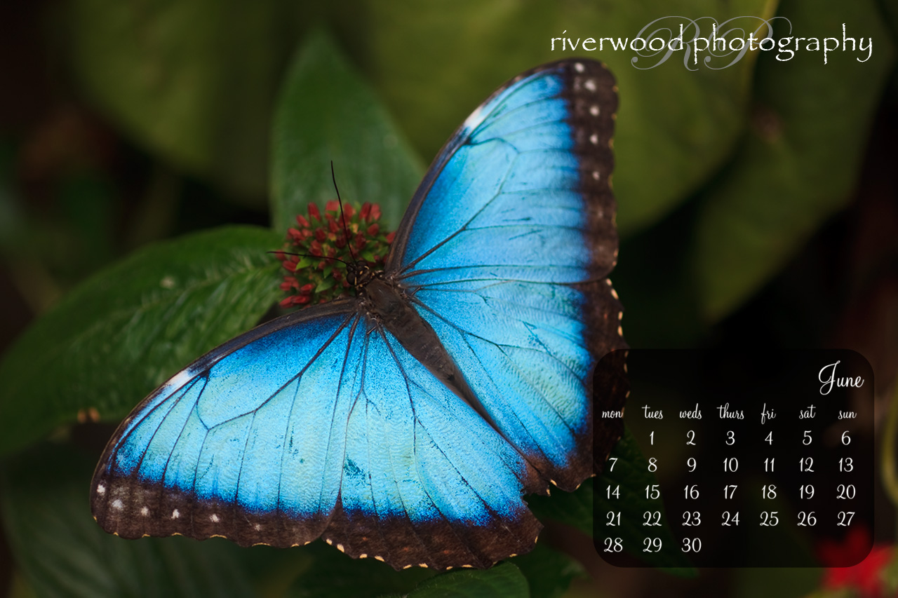 Free Desktop Wallpaper for June 2010 | Butterfly | Riverwood Photography