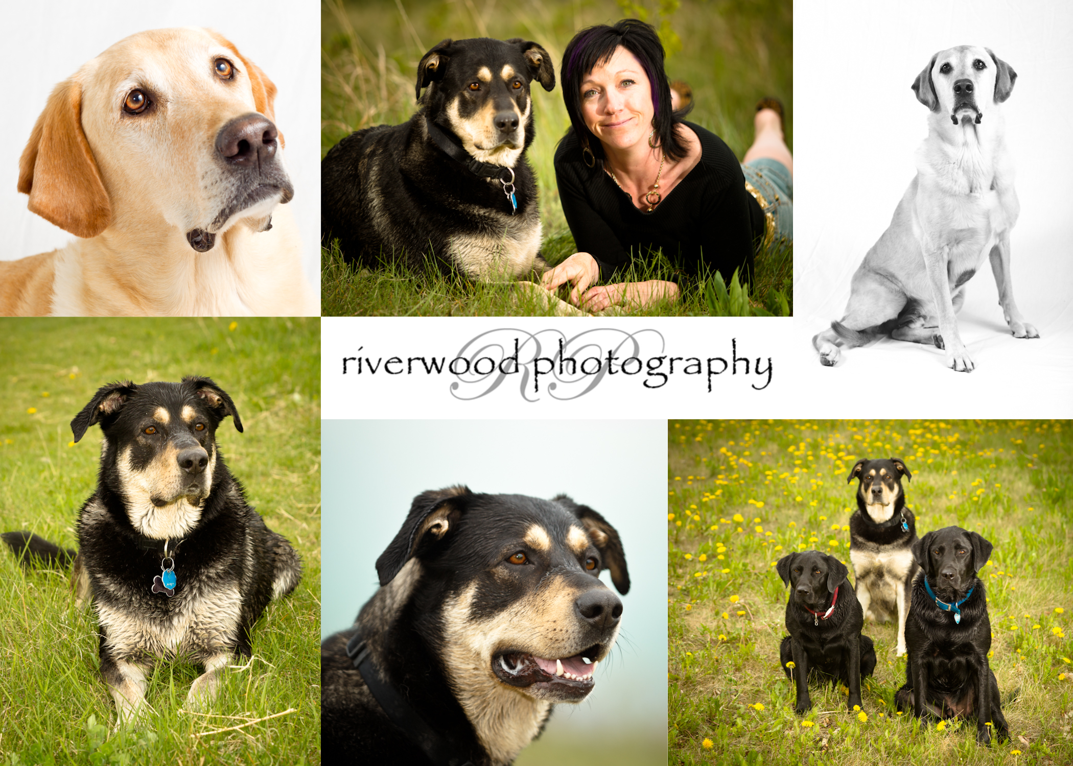 Pet Photography with Pet ViTails