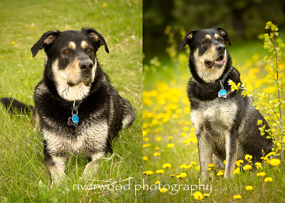 Pet Photography Session with Pet ViTails