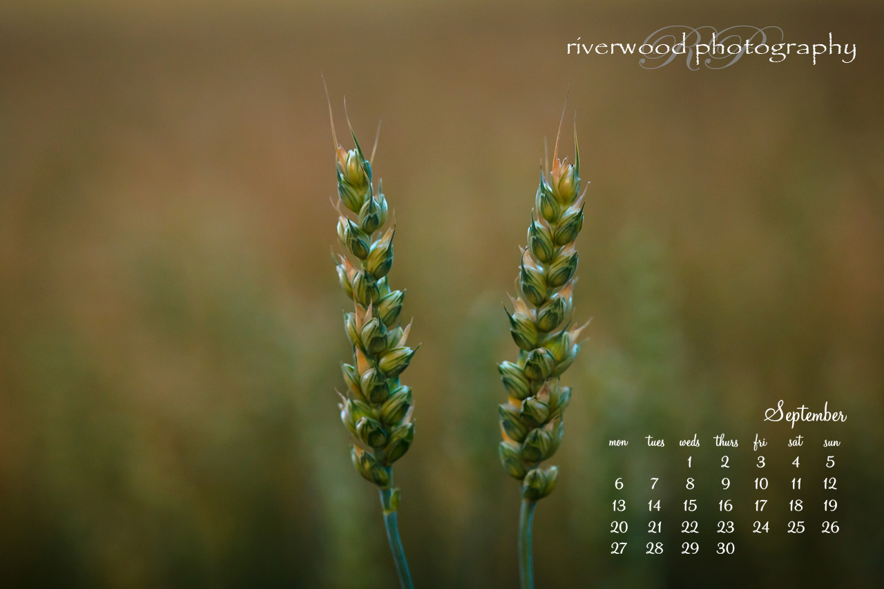 Free Desktop Wallpaper for September 2010