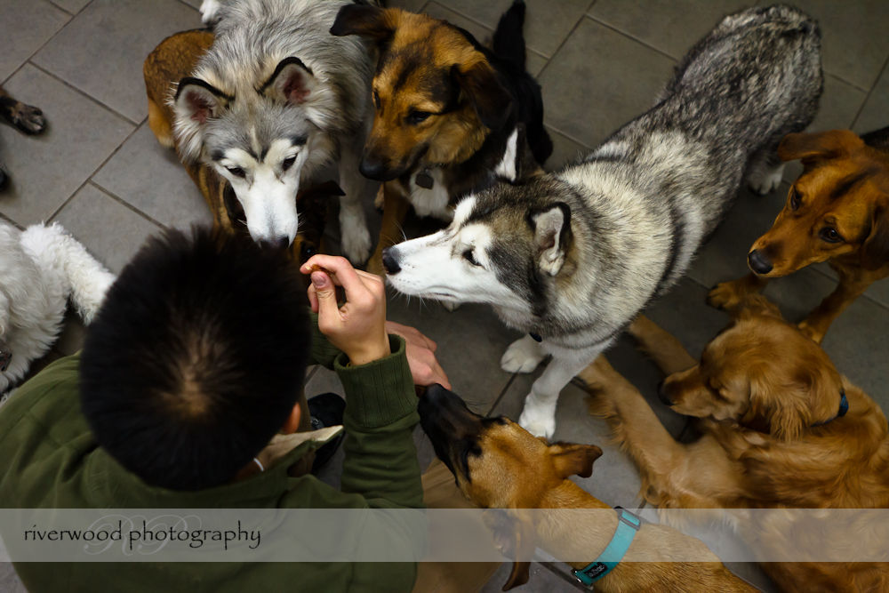 Pawsitively Natural Dog Daycare