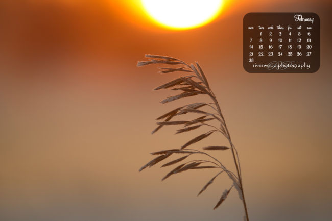 Free Desktop Wallpaper from Riverwood Photography | Frost Covered Grasses