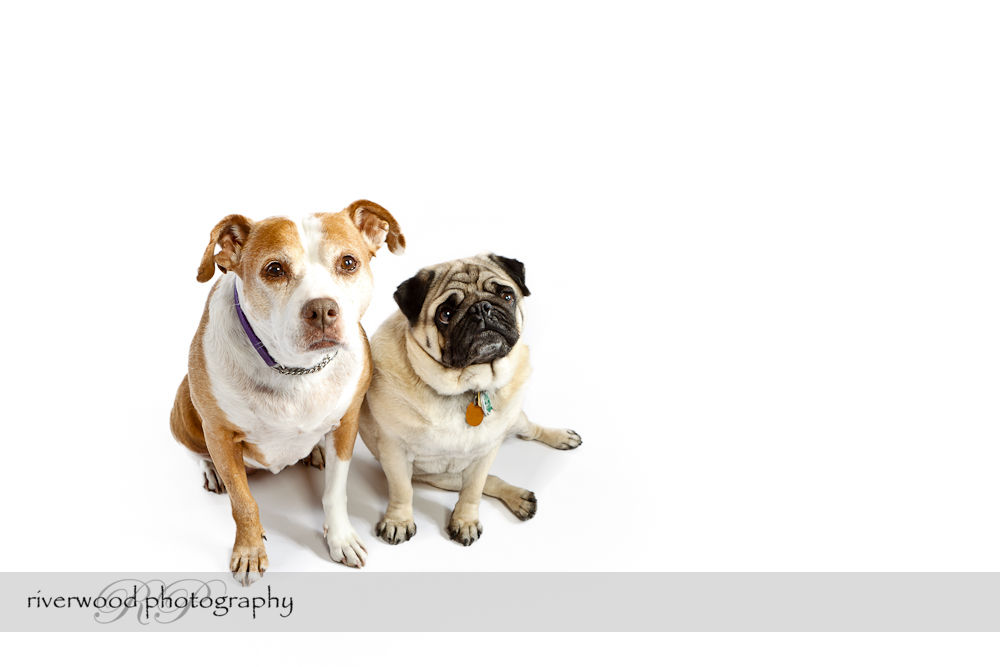 Pet Photography Session with Earl and Bella