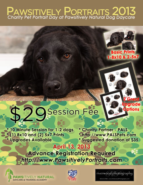 Pawsitively Portraits 2013 Poster - Pet Portrait at Pawsitively Natural Dog Daycare