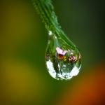 Reflecting Echinacea