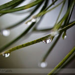 Abstract Water Droplets on Needles