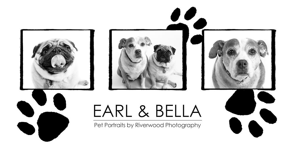 Earl-Bella Wall Panel - Pet Portraits