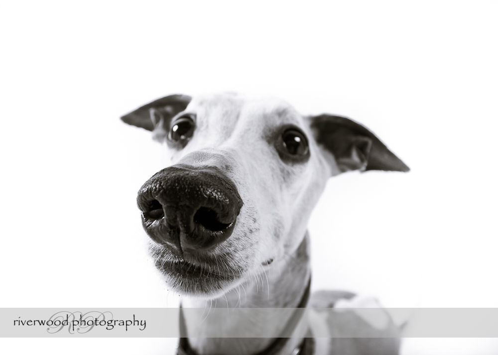 Pawsitively Portraits: Dog Day