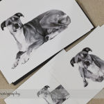 Dog Day Print Orders