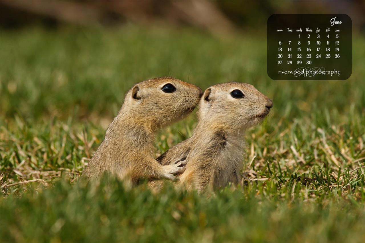 Free Desktop Wallpaper for June 2011 - Baby Gophers