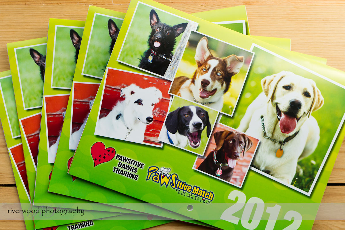 Pawsitive Dawgs Training Charity Calendar (1)