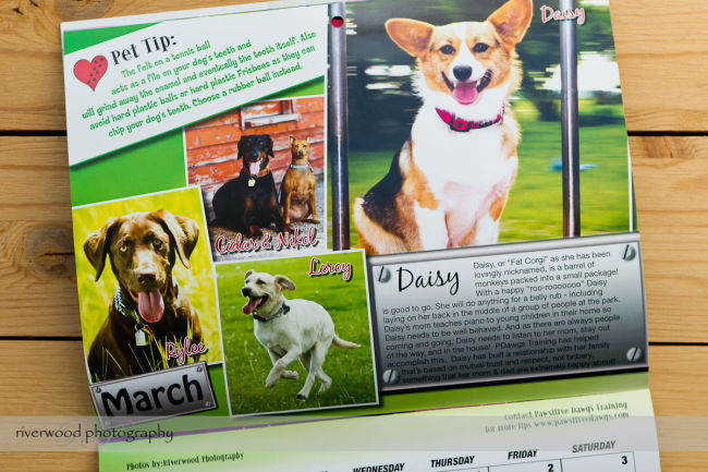 Pawsitive Dawgs Training Charity Calendar (3)