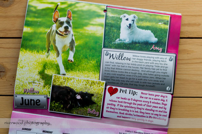Pawsitive Dawgs Training Charity Calendar (4)