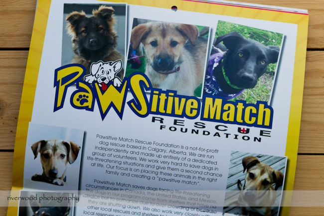 Pawsitive Dawgs Training Charity Calendar (5)