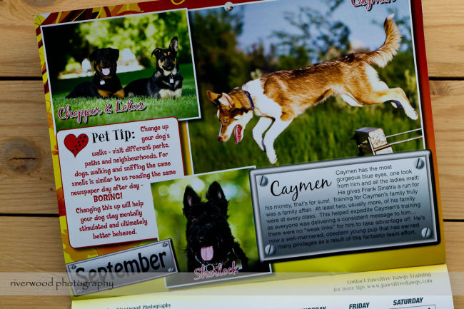 Pawsitive Dawgs Training Charity Calendar (6)