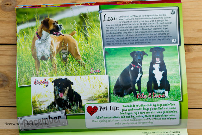 Pawsitive Dawgs Training Charity Calendar (7)