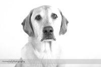 Studio Pet Photography Session