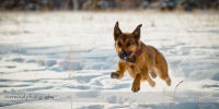 Keira Running at River Park Dog Park in Calgary