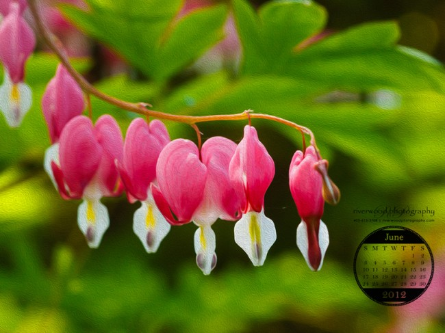 Free Desktop Wallpaper for May 2012 from Riverwood Photography