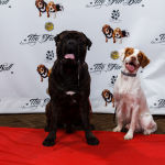 Fur Ball Red Carpet Pawperazzi Portraits (1)