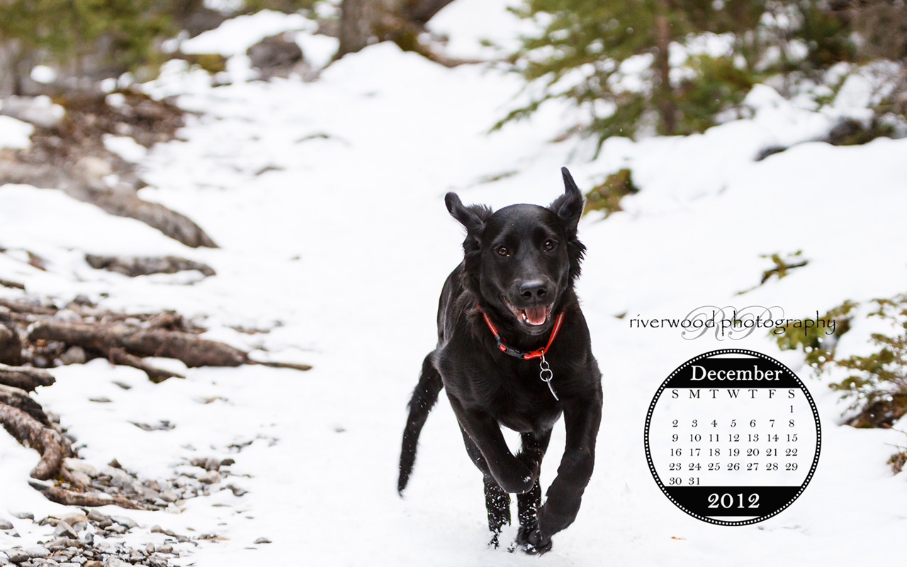 Free Desktop Wallpaper for November 2012 - The Pure Joy of a Running Puppy