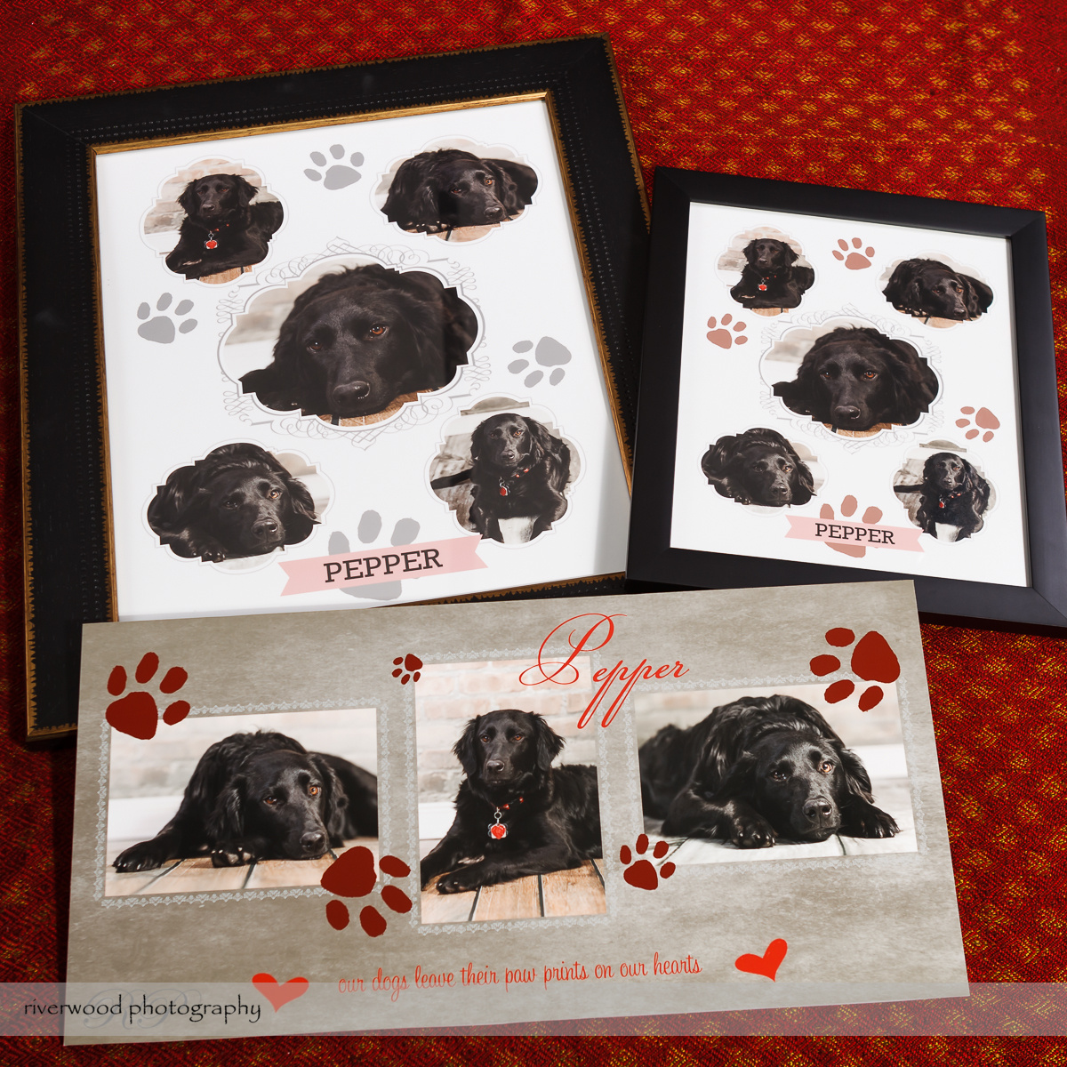Dog Day 2013 Product Samples