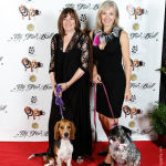 Red Carpet Pawperazzi Portrait at The Fur Ball 2013 (37)