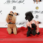 Red Carpet Pawperazzi Portrait at The Fur Ball 2013 (31)