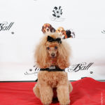 Red Carpet Pawperazzi Portrait at The Fur Ball 2013 (30)