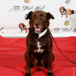 Red Carpet Pawperazzi Portrait at The Fur Ball 2013 (26)