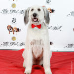 Red Carpet Pawperazzi Portrait at The Fur Ball 2013 (22)