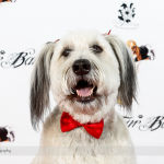 Red Carpet Pawperazzi Portrait at The Fur Ball 2013 (21)