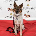 Red Carpet Pawperazzi Portrait at The Fur Ball 2013 (14)