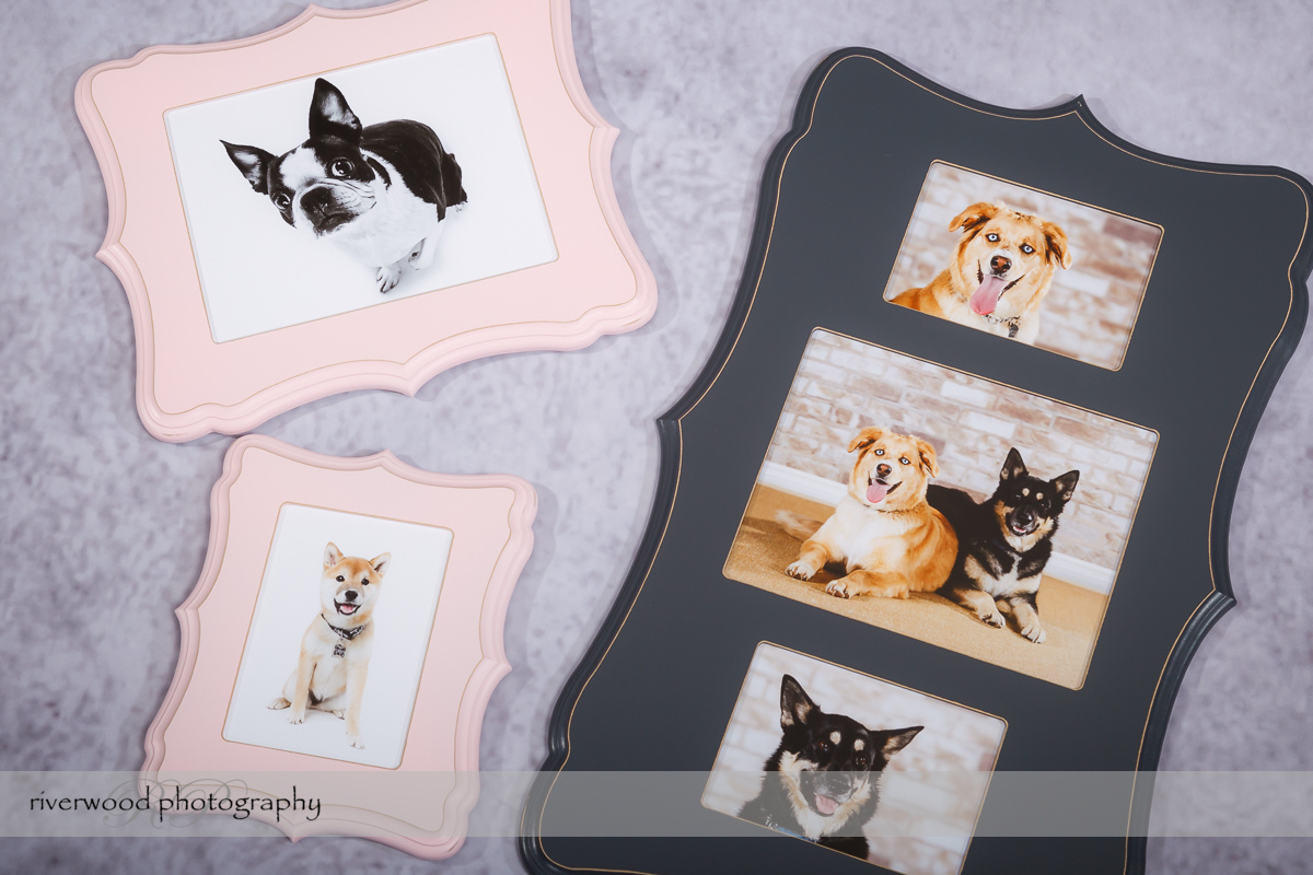 Product Showcase – Specialty Frames for Dog Day 2014