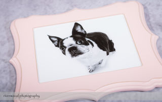 Boutique Specialty Frames for Dog Day 2014