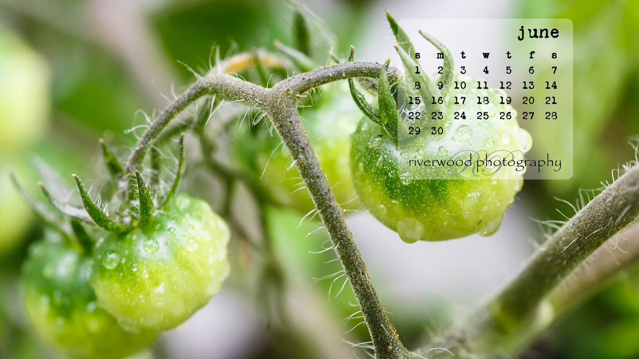 Free Desktop Wallpaper for June 2014
