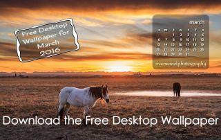 Free Desktop Wallpaper for March 2016