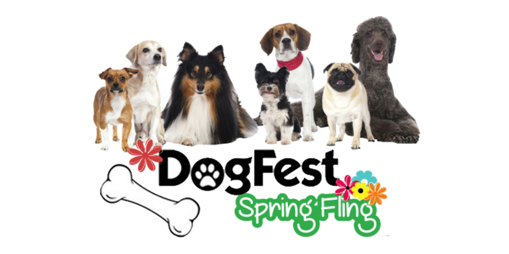 Pet Portraits at DogFest Spring Fling – May 6, 2017