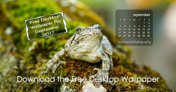 Free Desktop Wallpaper For September 2017 Closeup Image Of A Tree Frog On Branch
