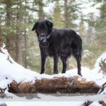 Hiking the Heart Creek Trail in Winter