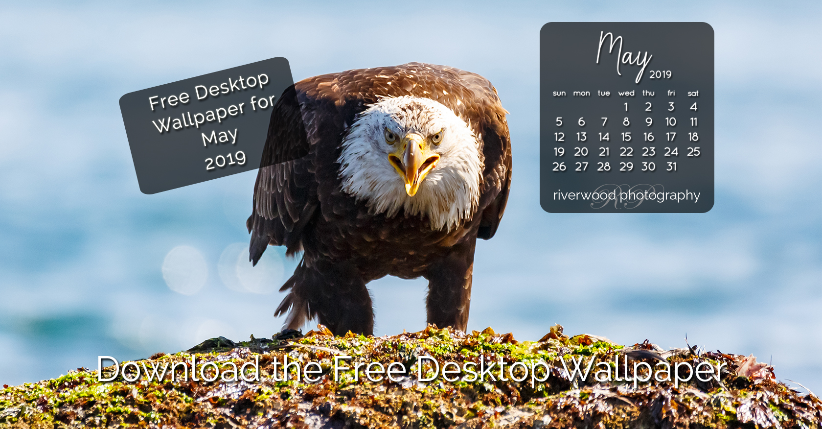 Free Desktop Wallpaper for May 2019 – Bald Eagle with Lunch