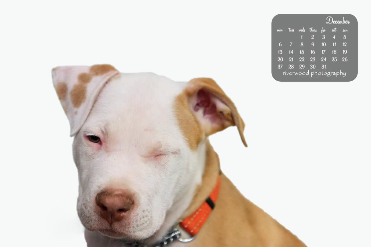Free Desktop Wallpaper for December 2010