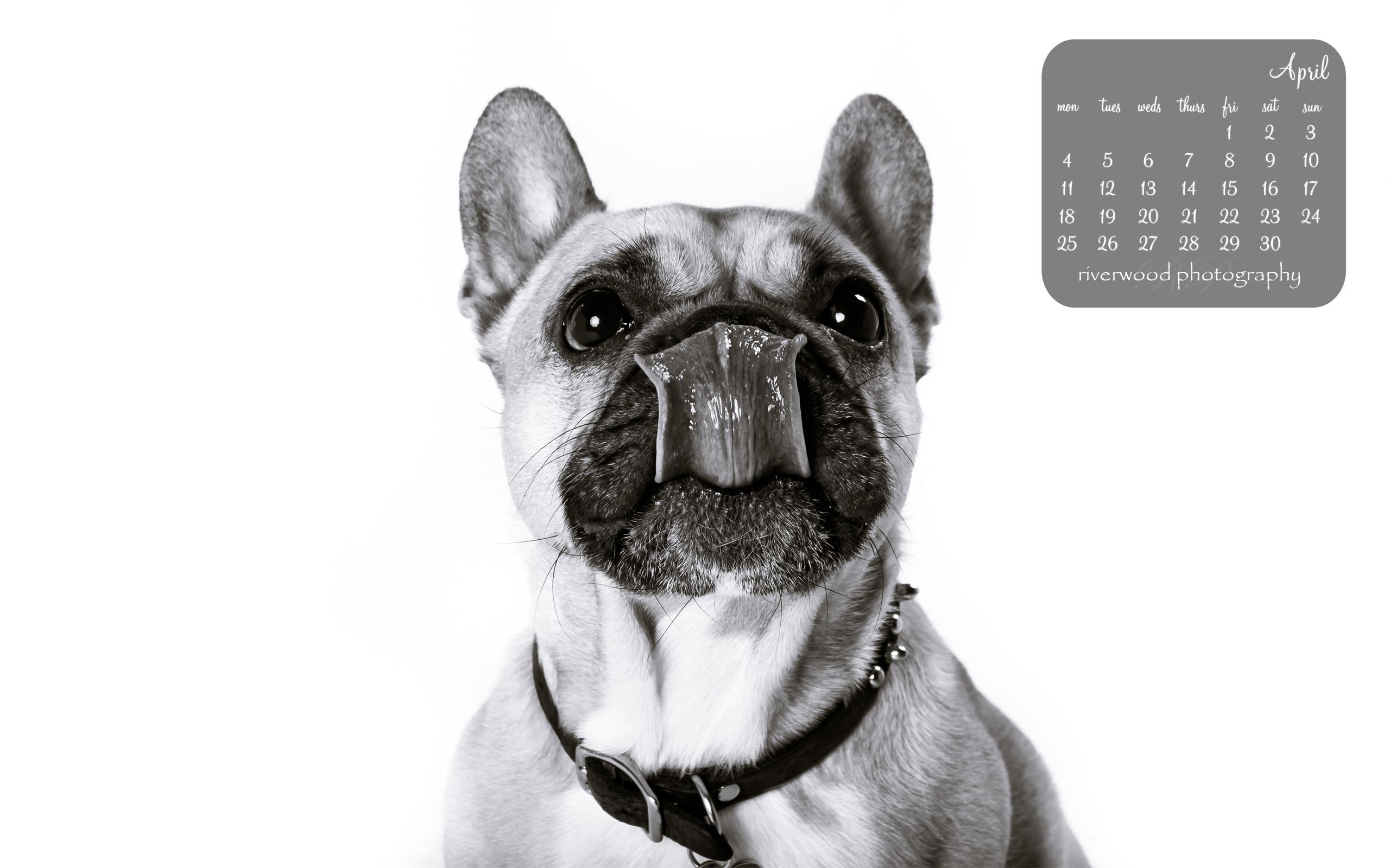Free Desktop Wallpaper from Riverwood Photography | Riverwood Photography. Calgary, Alberta, Canada